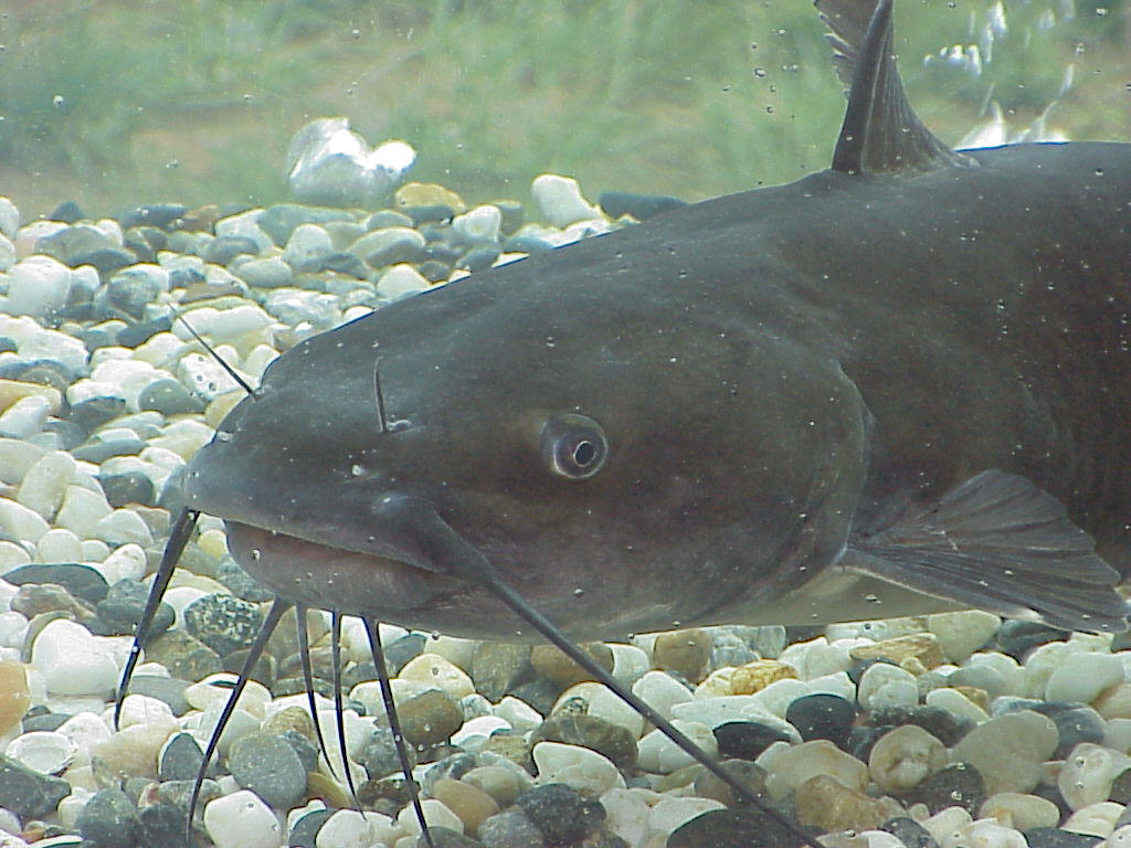 Fishhound lists the 50 best u s lakes and rivers for for Best time to fish for catfish