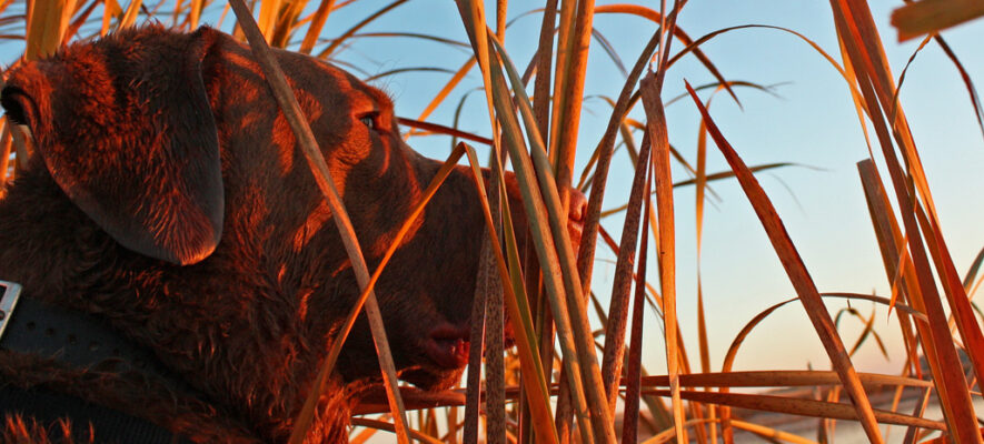 Dog Duck Hunting Homepage Banner 2