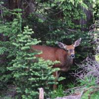 RI Deer Hunting Original
