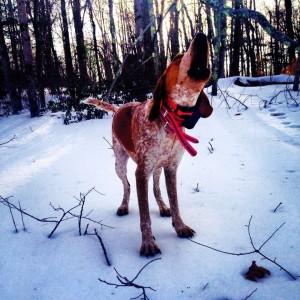 hound_baying