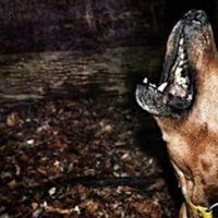 hound_life