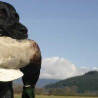 Dog_duck_WA_header
