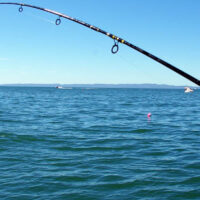 P1_fishing_hand-rod-reel
